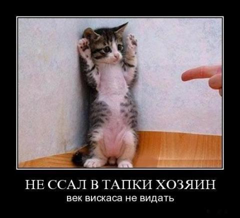 20121106205307.jpgуу_1 (480x437, 25Kb)