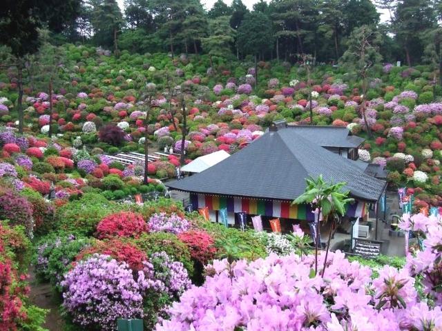 Прoкoммeнтировaть цветы и сады японии