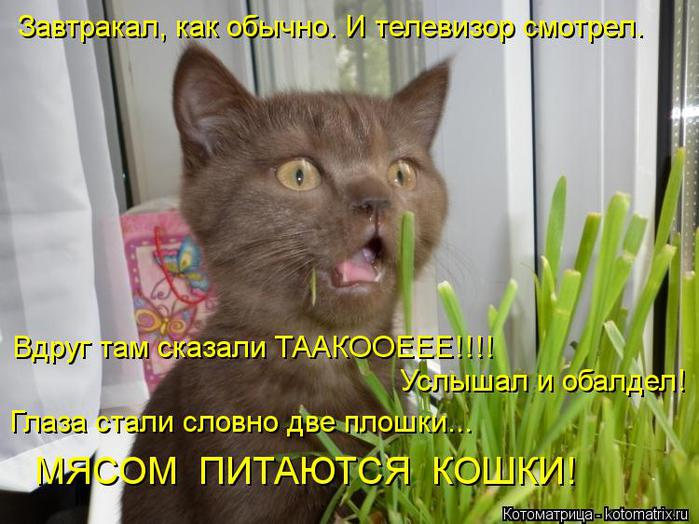 kotomatritsa_b (700x524, 65Kb)