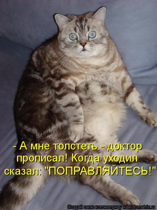 kotomatritsa_LZ (524x700, 57Kb)