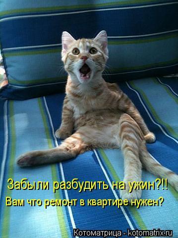kotomatritsa_ZR (359x480, 34Kb)