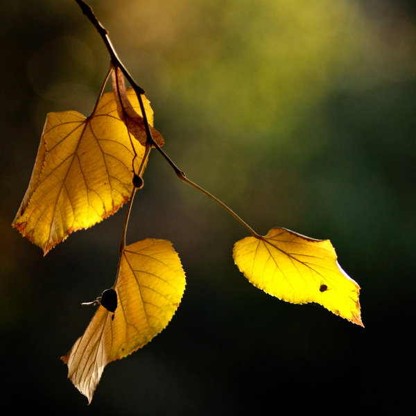 Autumn_again_by_phrozendesign (600x600, 57Kb)