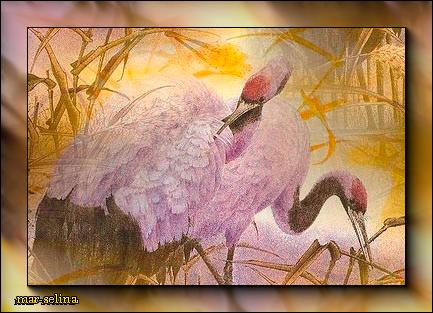 Название: Розовые Фламинго