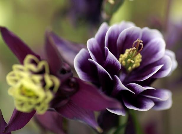 6247_plant_flower_petals_ (616x452, 61Kb)