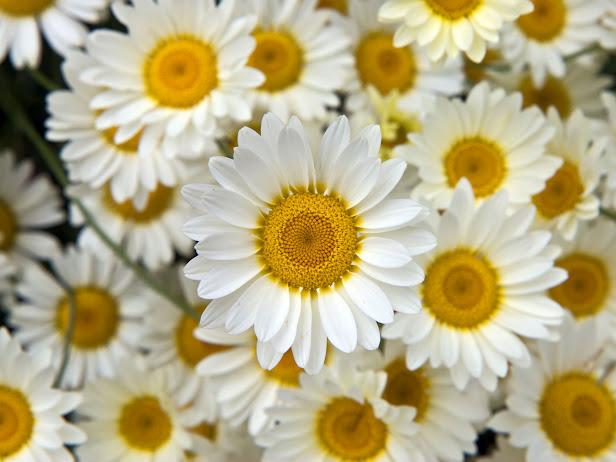 flowers 5 (616x462, 75Kb)