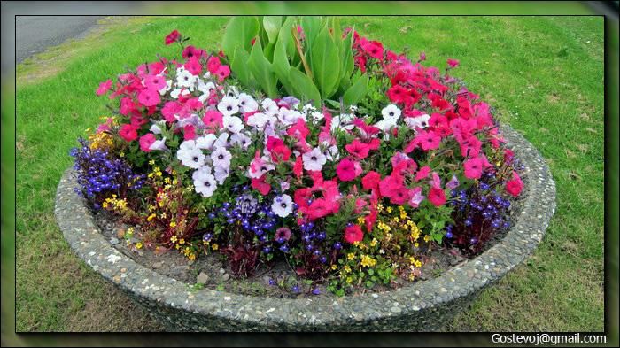 Клумбы: виды клумб и правила размещения цветов на клумбах