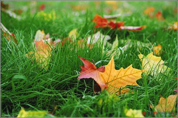 1282762433_autumn_1 (600x400, 40Kb)