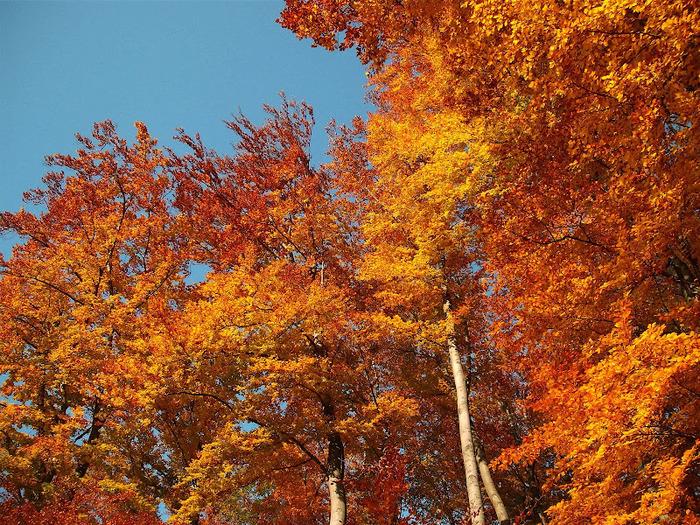 Закружила осень листопадами, заблистала хрупкой красотой... 85580