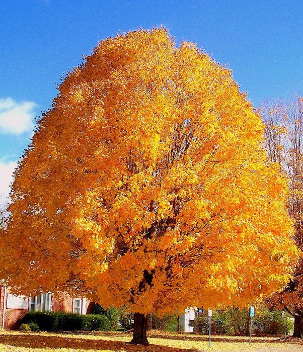 Закружила осень листопадами, заблистала хрупкой красотой... 34717