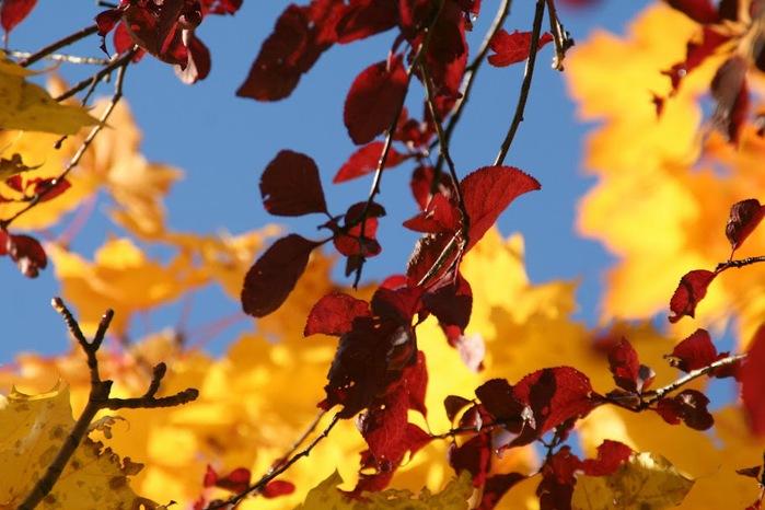 Закружила осень листопадами, заблистала хрупкой красотой... 41084