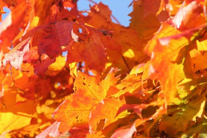 Закружила осень листопадами, заблистала хрупкой красотой... 37352