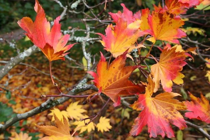 Закружила осень листопадами, заблистала хрупкой красотой... 54684