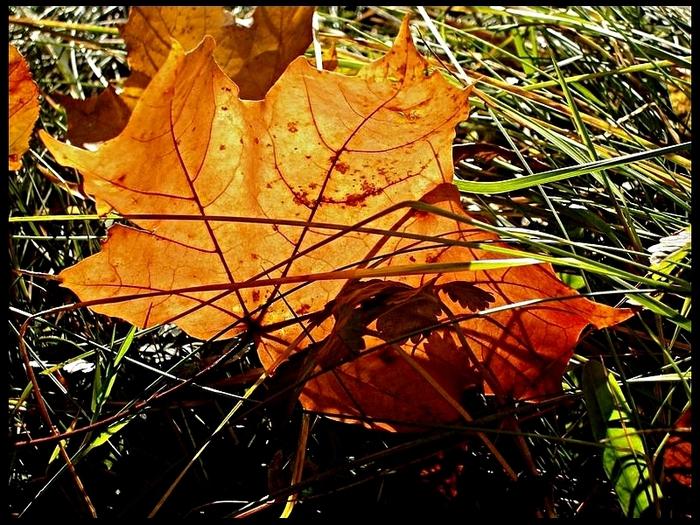 Закружила осень листопадами, заблистала хрупкой красотой... 10047