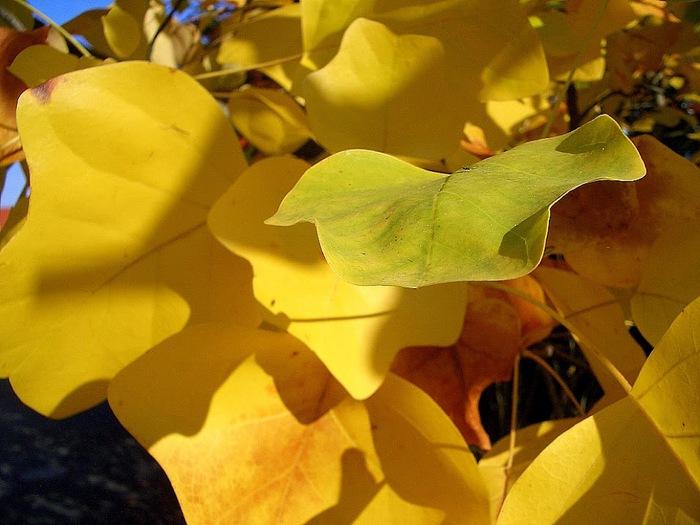 Закружила осень листопадами, заблистала хрупкой красотой... 59305