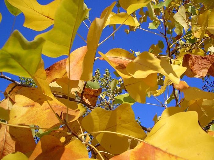 Закружила осень листопадами, заблистала хрупкой красотой... 17722