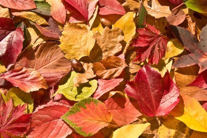 Закружила осень листопадами, заблистала хрупкой красотой... 32887