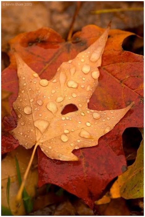 Закружила осень листопадами, заблистала хрупкой красотой... 41741