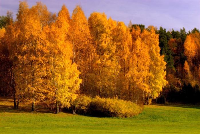 Закружила осень листопадами, заблистала хрупкой красотой... 51468
