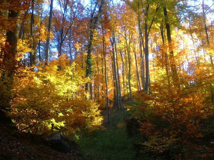 Закружила осень листопадами, заблистала хрупкой красотой... 82583