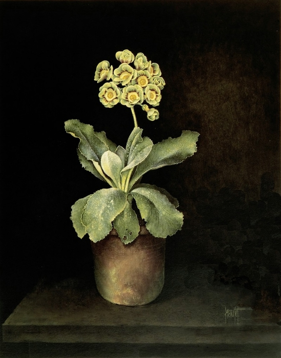 GREEN AND RED AURICULA IN CLAY POT51x41 cms Gouache1989(2) (549x700, 220Kb)