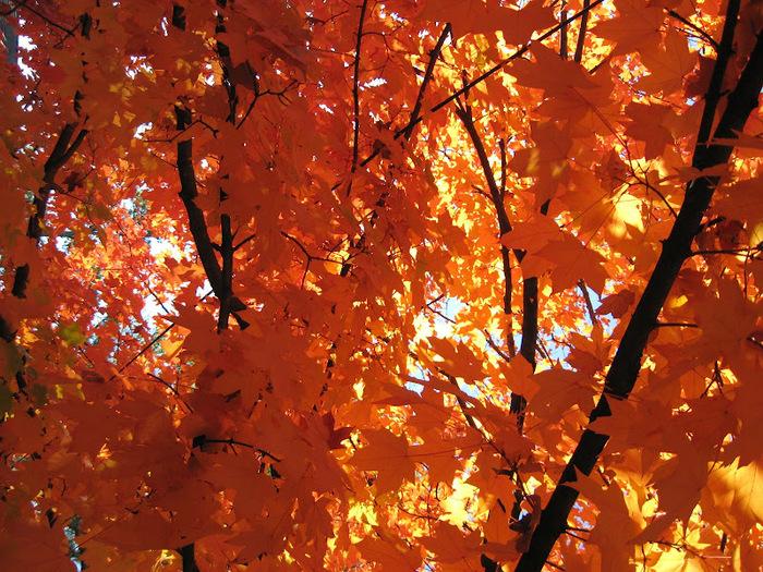 Закружила осень листопадами, заблистала хрупкой красотой... 12407