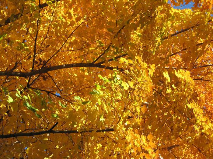 Закружила осень листопадами, заблистала хрупкой красотой... 67740