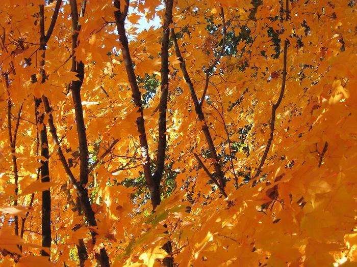 Закружила осень листопадами, заблистала хрупкой красотой... 89931