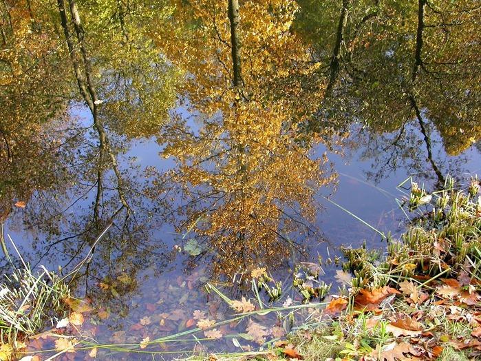 Закружила осень листопадами, заблистала хрупкой красотой... 55848