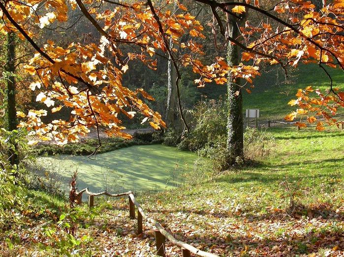 Закружила осень листопадами, заблистала хрупкой красотой... 11485