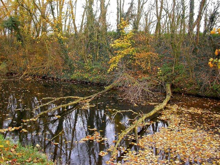 Закружила осень листопадами, заблистала хрупкой красотой... 45148