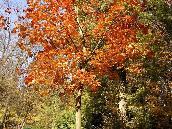 Закружила осень листопадами, заблистала хрупкой красотой... 44751