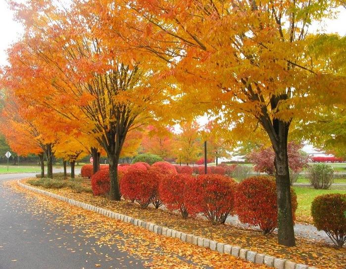 Закружила осень листопадами, заблистала хрупкой красотой... 29293