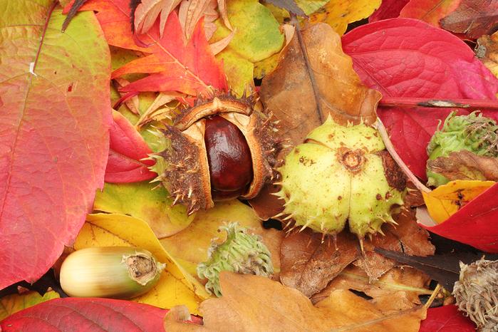 bigstock_Autumn_3710994 (700x466, 499Kb)