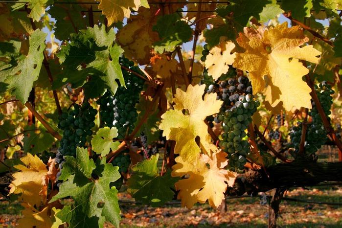 Закружила осень листопадами, заблистала хрупкой красотой... 51011