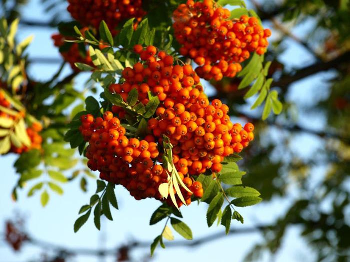 Закружила осень листопадами, заблистала хрупкой красотой... 43987
