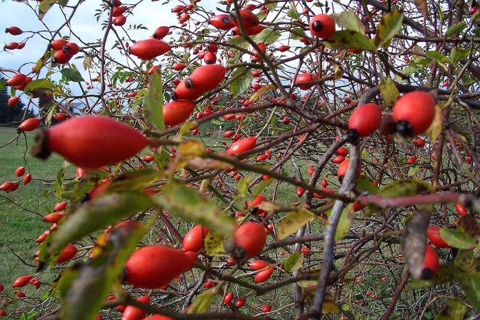 Закружила осень листопадами, заблистала хрупкой красотой... 93525