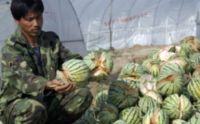 200x124-images-MB-2011-478-watermelons_ap (200x124, 7Kb)