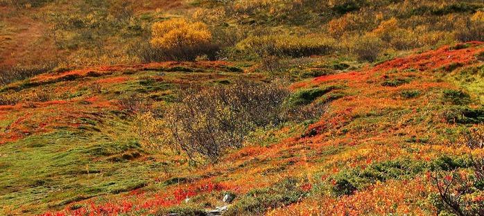 Закружила осень листопадами, заблистала хрупкой красотой... 48058