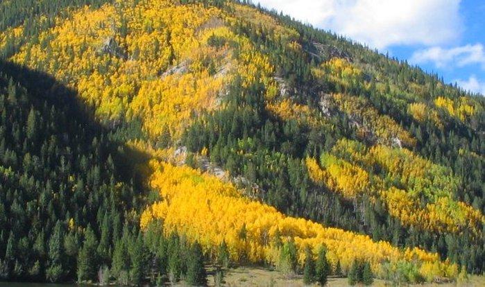 Закружила осень листопадами, заблистала хрупкой красотой... 34979