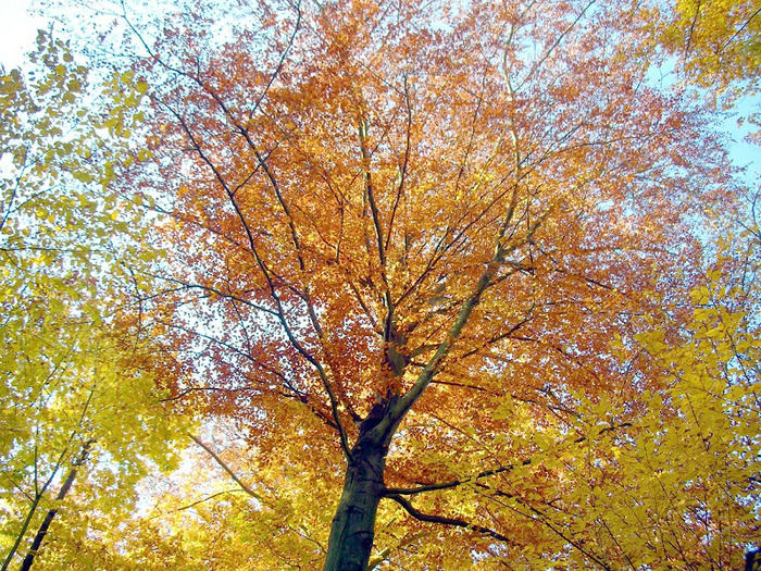 Закружила осень листопадами, заблистала хрупкой красотой... 75947