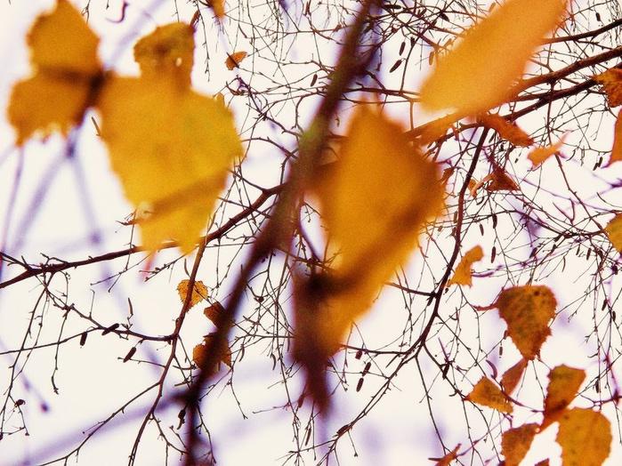 Закружила осень листопадами, заблистала хрупкой красотой... 38903