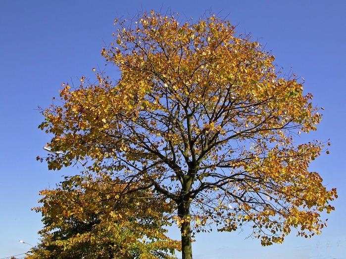 Закружила осень листопадами, заблистала хрупкой красотой... 85155