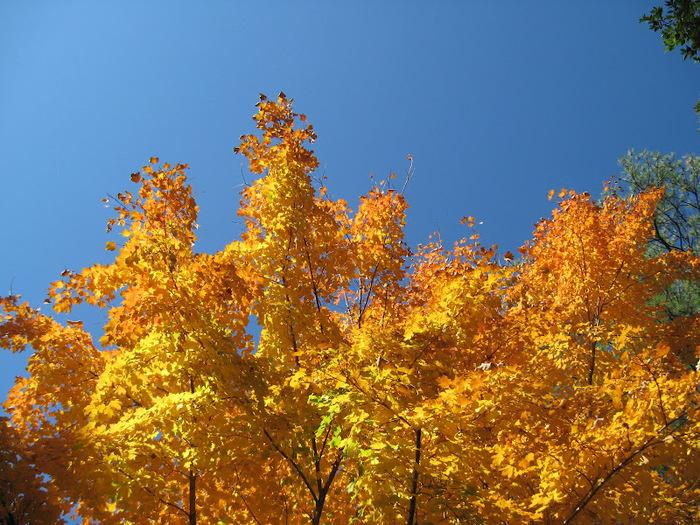 Закружила осень листопадами, заблистала хрупкой красотой... 69971
