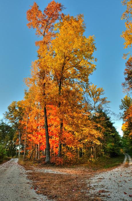 Закружила осень листопадами, заблистала хрупкой красотой... 66690