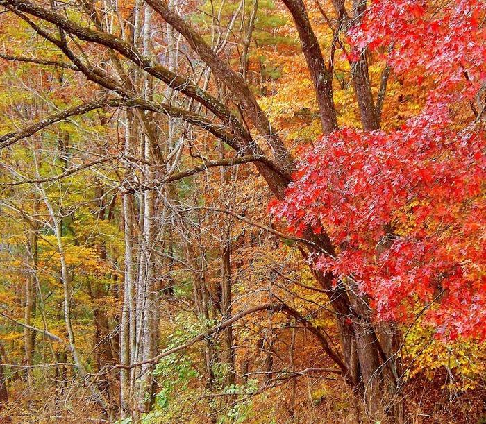 Закружила осень листопадами, заблистала хрупкой красотой... 18135