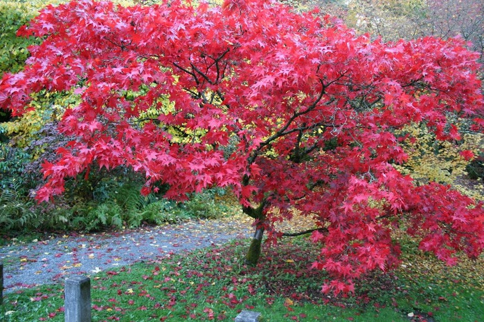 Закружила осень листопадами, заблистала хрупкой красотой... 46107