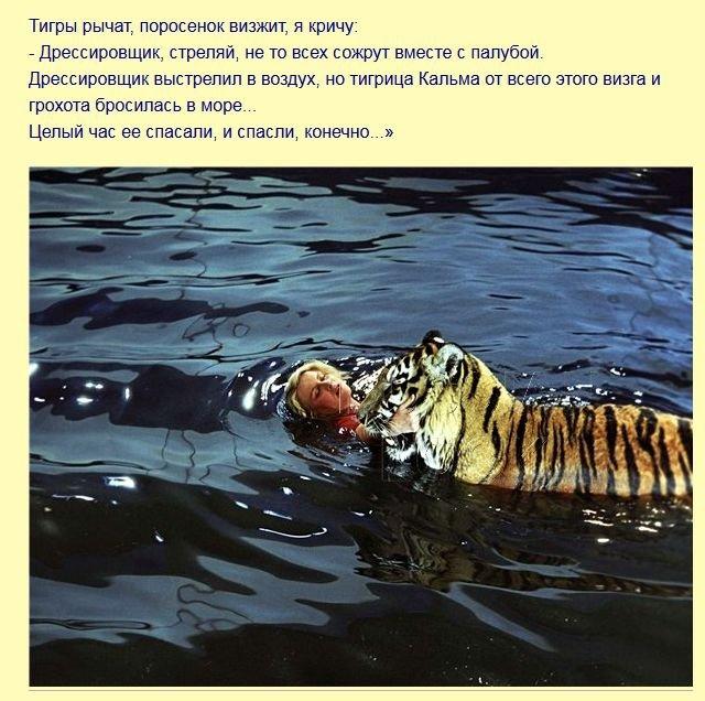 fakty_iz_filma_polosatyjj_rejjs_7_foto_7 (640x636, 91Kb)