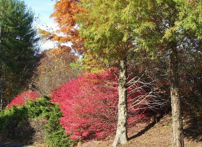 Закружила осень листопадами, заблистала хрупкой красотой... 70300