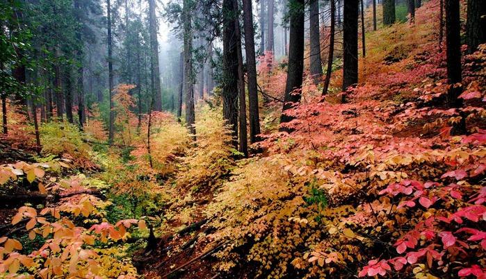 Закружила осень листопадами, заблистала хрупкой красотой... 93447