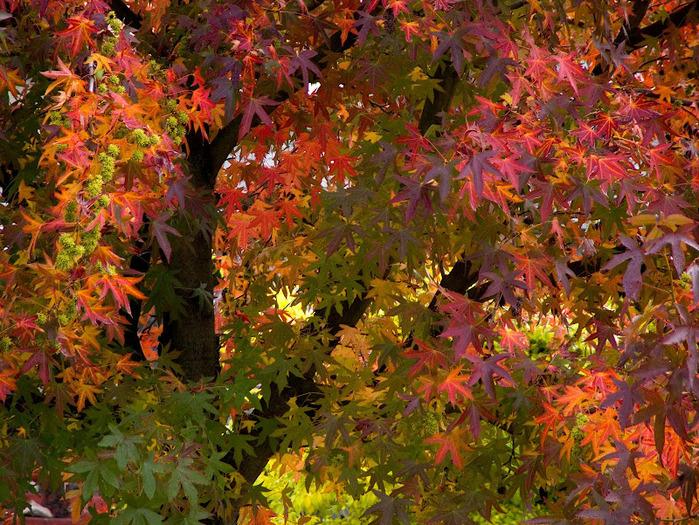 Закружила осень листопадами, заблистала хрупкой красотой... 75200